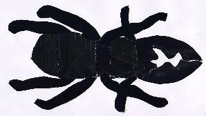 Lucanus cervus-vacaloura-Stag Beetle