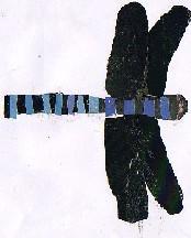 ODONATA AESCHNIDAE-libeliña-spring blue darner-