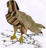 Circaetus gallicus-aguia cobreira-Short-toed Eagle