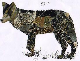 CANIS LUPUS-lobo-wolf