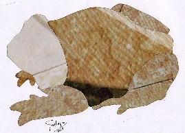 PELOBATES CULTRIPES-sapo de esporóns-Iberian Spadefoot Toad