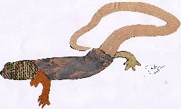 CHIOGLOSSA LUSITÁNICA-Saramaganta-Gold Striped-salamander